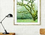 Oak tree photograph / woodland nursery /  fairy tree / dreamy landscape / moss green / green wall art / 8x10 16x20 print 'Mossy Woods'