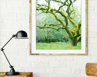 "Oak tree photograph woodland nursery art fairy tree dreamy landscape moss green wall art ""Mossy Woods"""