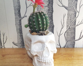Skull Plant Pot, Skull Planter, Skull Desk Tidy