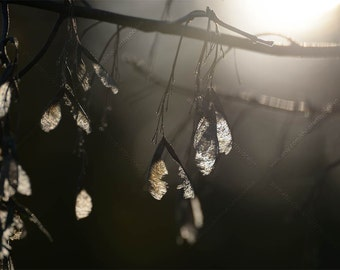 Maple Keys Fine Art Photo Print, Glowing Maple Tree Seeds Dangling in Sunlight, Dramatic High Contrast Wall Art, Moody Nature Picture