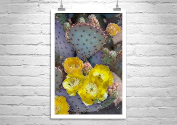 Cactus Art, Wall Art Photography, Tucson Arizona, Floral Art Print, Prickly Pear, Desert, Purple, Violet, Vertical Art
