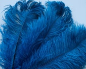 VOGUE OSTRICH PLUMES , Teal Blue, Peacock , 1 piece  / 510
