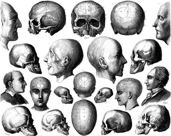 human anatomy heads printable art skulls png clip art digital image download collage medical science black and white art printables