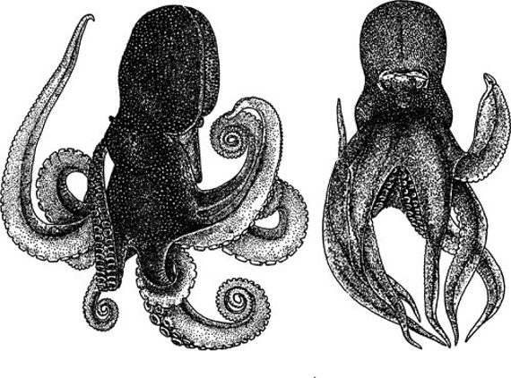 2 octopus sealife clipart png clip art Digital image digi stamp digital stamp ocean animals graphics downloads printables