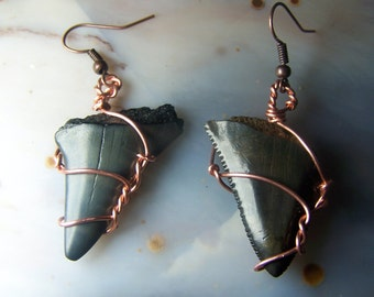 Shark Tooth fossil earrings - copper wire wrap - usa mineral genuine specimen genuine natural stone black - french hooks wire wrap CN8N