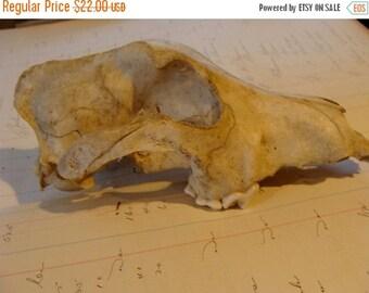 20PercentOff Real Skull unit 12