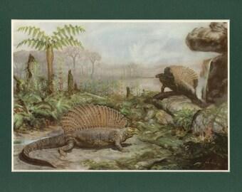 Vintage Dinosaur Edaphosaurus Illustration
