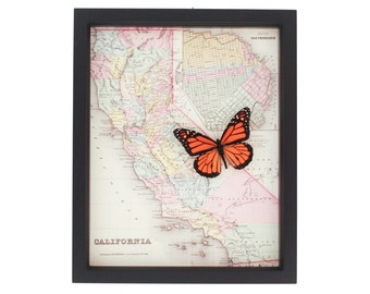 Map of California Framed Butterfly Display