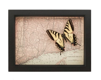 Framed Map of Conneticuit with real insect shadowbox