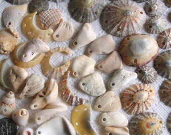 57 Sea Shell Charms and Connectors Drilled 2mm holes Jewellery Supplies (1751)