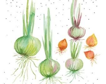 Pastel onion garden vegetables illustration, Onion art, Watercolor vegetable, Veggie watercolor art, Vegetable art, Kitchen decor, Food art