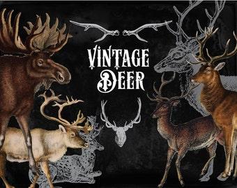 Clipart - 31 vintage Deer, digital clip art and photoshop brushes Megapack