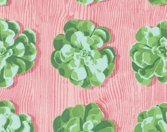 Joel Dewberry - Cali Mod Collection - Succulents in Cactus