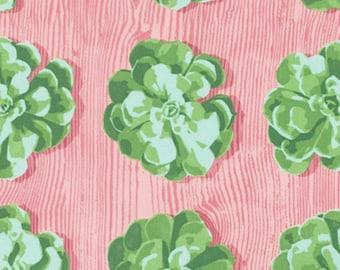 SALE - Joel Dewberry - Cali Mod Collection - Succulents in Cactus