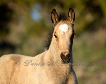 Fearless Colt Wild Mustang Foal Photo - Wild Horses Photos - Baby Animal Photos - Wild Mustangs - Wild Horses - Horse Gifts