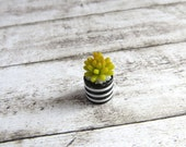 Light green Echeveria in striped vase for dollhouse in 1:12 scale