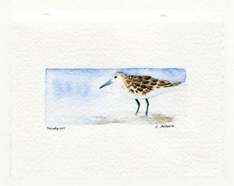 Sandpiper Bird Art, Original Watercolor