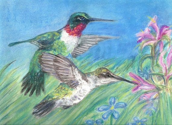 Colorful hummingbirds flying - photo#38
