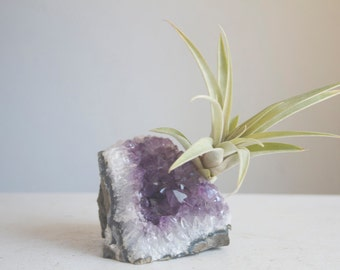 Amethyst Geode Chunk With Air Plant, Unique Airplant Planter, Sparkling Crystal Garden, Gift For Her Teacher, Nature Lover, Friend, Under 30