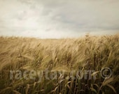 Gold Gray Wall Art, Wheat Field, Nature Photography, Rustic Kitchen Decor, Farm Kitchen, Country Home Decor
