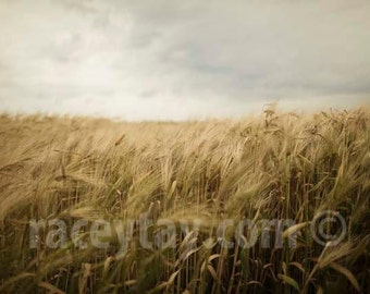 Photo of Wheat Field, Gold, Gray, Rustic Wall Art, Fall, Nature Photography, Kitchen Decor, Rustic Home Decor, Farm