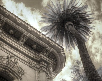 palm tree infrared photography nature balboa park san diego feng shui home decor sepia photography