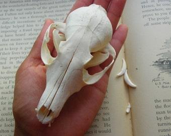 Cruelty Free No. C10 Fox Skull