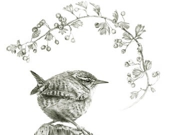 Wren - Limited Edition Giclee Print from an Original Drawing