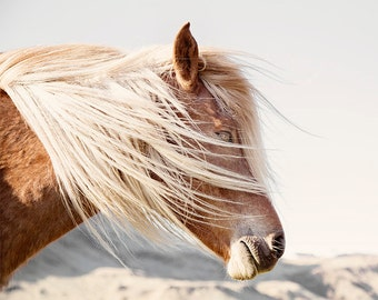 Icelandic Horse Art | Color Horse Photograph | Animal Wall Art