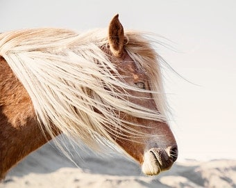 Icelandic Horse Photograph in Color | Mane blowing