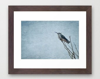 Wall Decor Photograph Resting Hummingbird