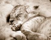 Safari Nursery Decor, SLE...