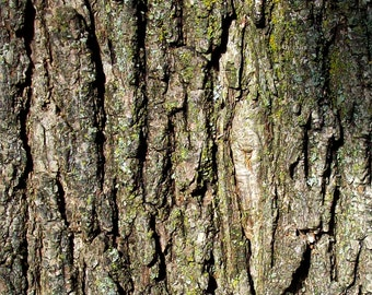 Tree Bark / Nature Photography / Instant download / Digital Image Only / NOT A PRINT