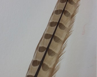 SALE Millinery Feathers - Long Pheasant Feather  - Blonde