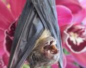 Sleeping Tuxedo Bat - SHIP FREE 2