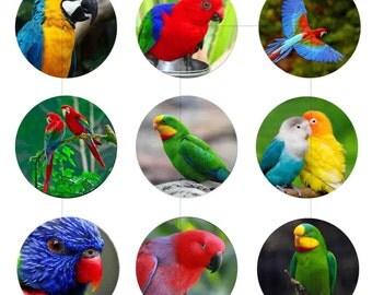 "Digital Download, Bird, Parrot, Nature, Digital Collage Sheet, Instant Download, Bottle Caps, 1.5"", 1.25"", 1"", Circles, dcc020"