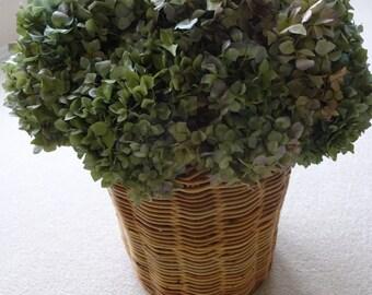 Hydrangeas   Hydrangea Basket  Floral Arrangement  Shabby Chic    Dried Hydrangea Arrangement  Home Decor Dried Flowers