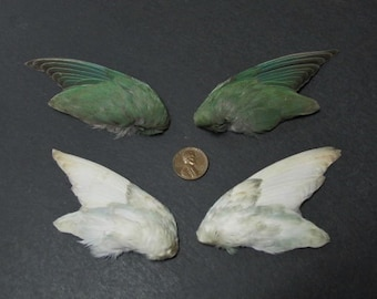 2 Pairs of Dried Birds Wings Feathers Art Craft Taxidermy Sea Green and Blue & Fawn