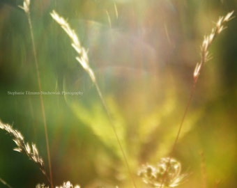 Fall, Autumn Gold,Brown, Yellow,  Harvest,  Rustic,  Nature Photography, Queen Anns Lace