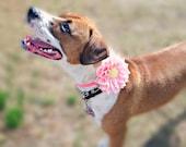 Fabric Dahlia Dog Collar Flower  - Pet Accessory - Dog Clothes - Dog Accessories - Cat Acessories - Dog Wear - Dog Wedding - Dog Corsage