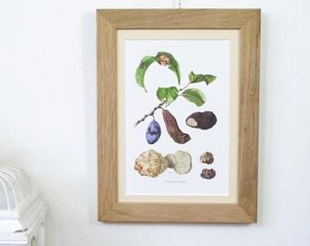 Vintage Framed Botanical Chart Fungi
