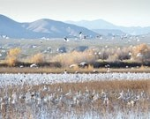 Bird Photography Print 11x14 Fine Art New Mexico Bosque del Apache Snow Geese Wildlife Mountain Nature Landscape Photography Print.