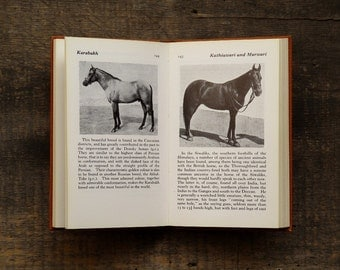Vintage gift for horse lover,  horses book, The Observer's Book of Horses and Ponies