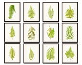 Vintage Ferns Botanical Print Set No. 2- Gallery Wall Art - Giclee Canvas Prints - Illustrations - Print Sets - Botanical Print - Canvas Art