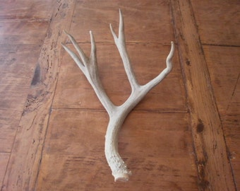 One of a kind all natural real decorative deer antler design decor crafts art centerpiece gift rustic display