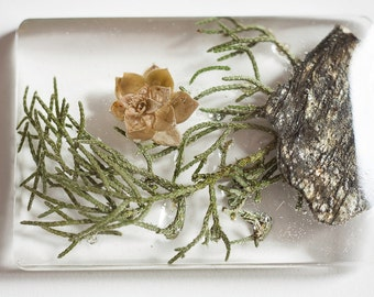 Brooch or pendant, real pine needles leaves, stone micaceous, flower succulent plant of the Italian alps in in resin