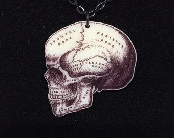 Medical anatomical skull