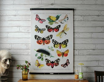 Butterflies Chart / Vintage Pull Down Reproduction / Canvas Fabric or Paper Print / Oak Wood Hanger with Brass Hardware / Organic Finish