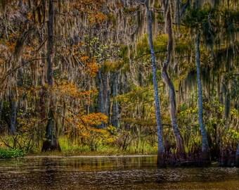 Bayou Black HDR • Louisiana Photography • Fine Art Photography • HDR Photography • Nature Photography • Landscape Photography