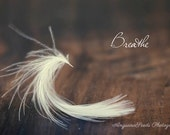 White feather photo, Typography print, inspiration image, minimalist picture, Breathe, Zen, Meditative, Words on Photograph, gift under 40